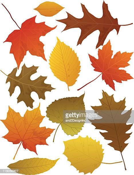 stockillustraties, clipart, cartoons en iconen met fall leaves - gekarteld