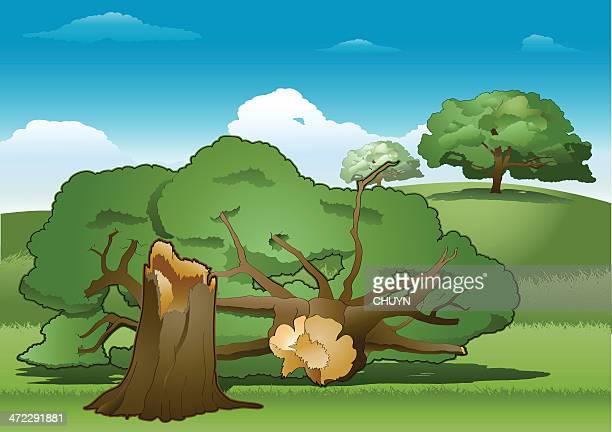 ilustrações de stock, clip art, desenhos animados e ícones de árvore caída - desmatamento