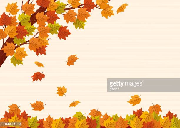 illustrazioni stock, clip art, cartoni animati e icone di tendenza di falling autumn leaves. vector illustration. - autunno