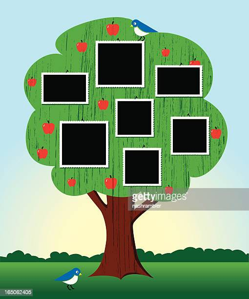 ilustraciones, imágenes clip art, dibujos animados e iconos de stock de árbol genealógico con bastidores - family tree