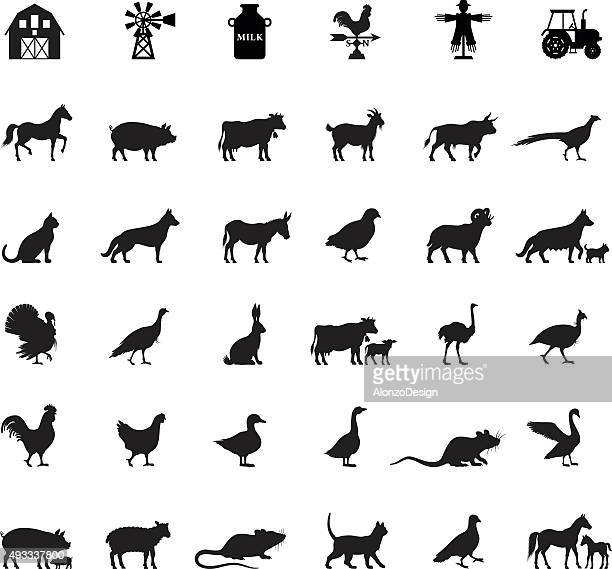illustrazioni stock, clip art, cartoni animati e icone di tendenza di fattoria e animali domestici - animal