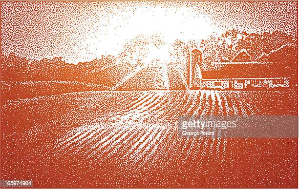 farm and sunset - corn crop stock illustrations, clip art, cartoons, & icons