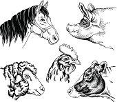 Farm Animal Portraits