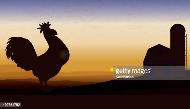 ilustrações de stock, clip art, desenhos animados e ícones de farm animal, galo no amanhecer crowing fundo - acordar