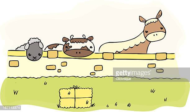 farm animals behind a wall - paddock stock illustrations, clip art, cartoons, & icons