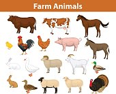 Farm animals collection with cow, bull, horse, hen, chicken, rooster, pig, goat, sheeps, ducks, turkey, rabbits, donkey and goose
