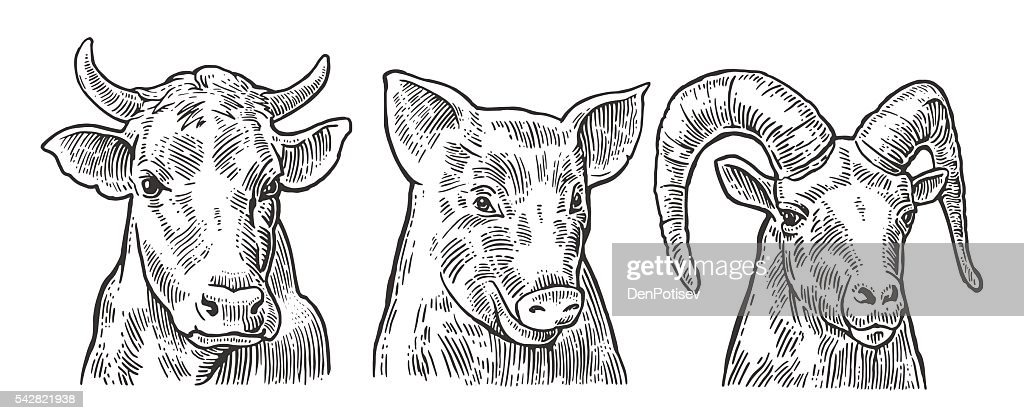 Farm animals icon set. Pig, cow and goat heads isolated