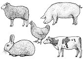 Farm animals illustration, drawing, engraving, line art, realistic, vector