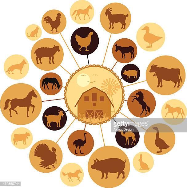 Farm Animals Montage