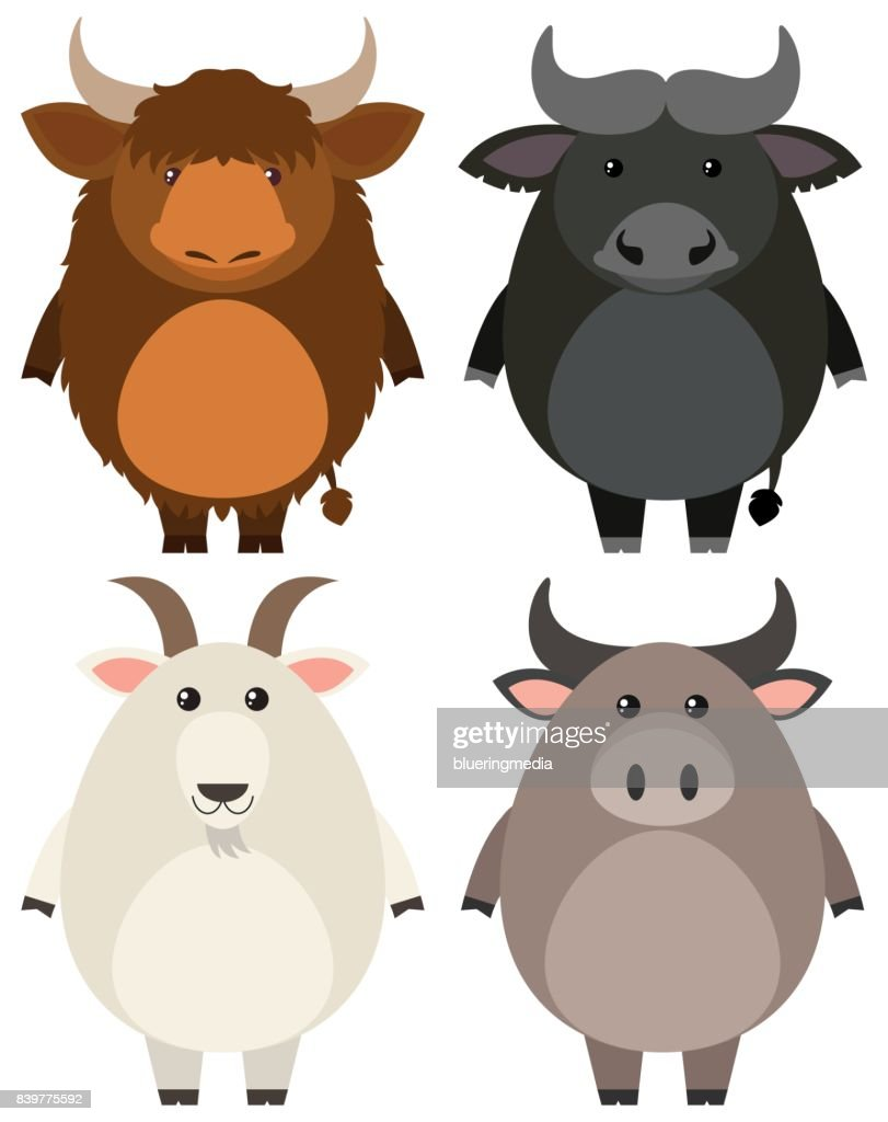 Farm animals on white background