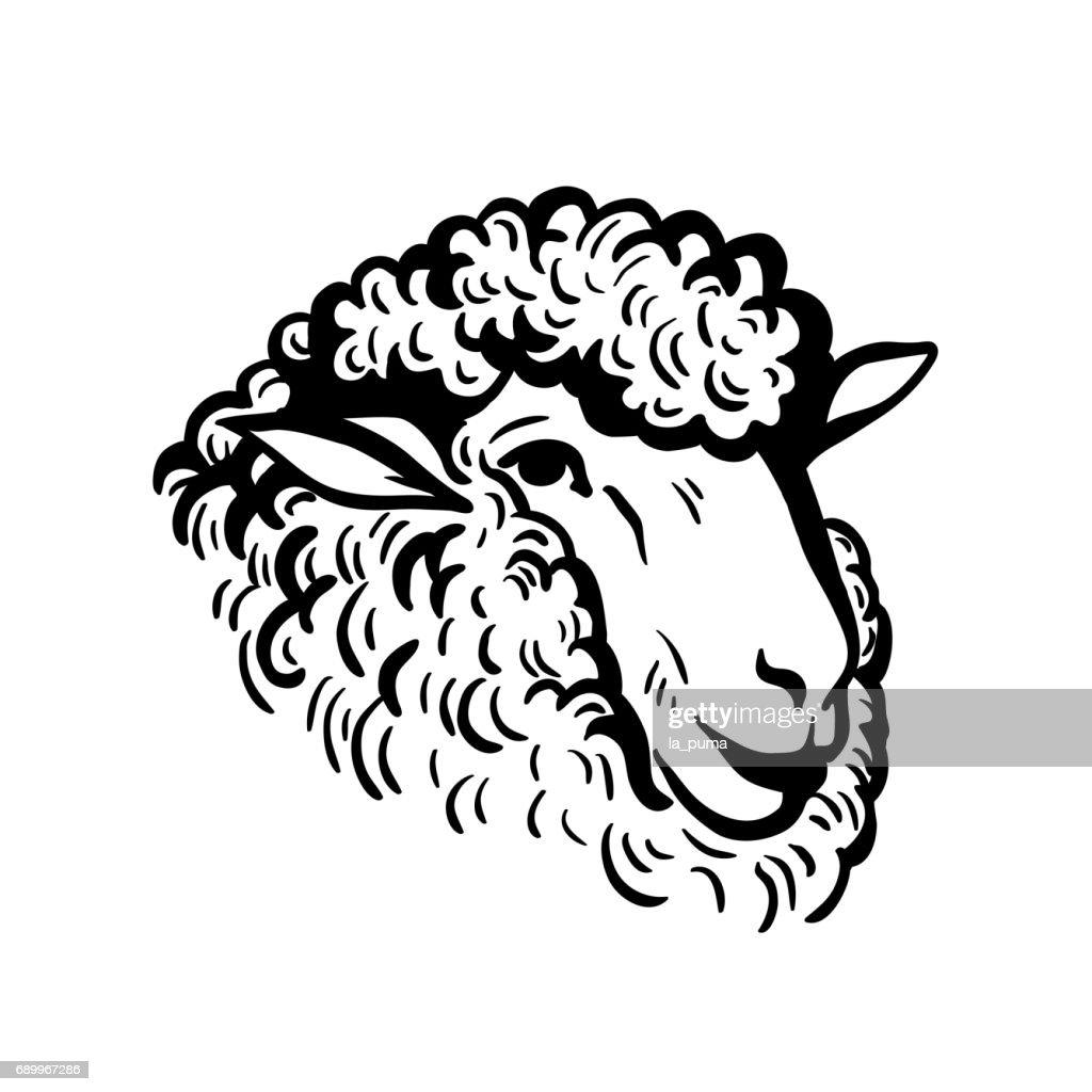farm animals. sheep head sketch