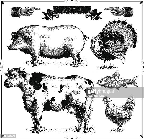 farm animals - woodcut stock illustrations