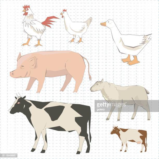 farm animals - beef stew stock illustrations, clip art, cartoons, & icons