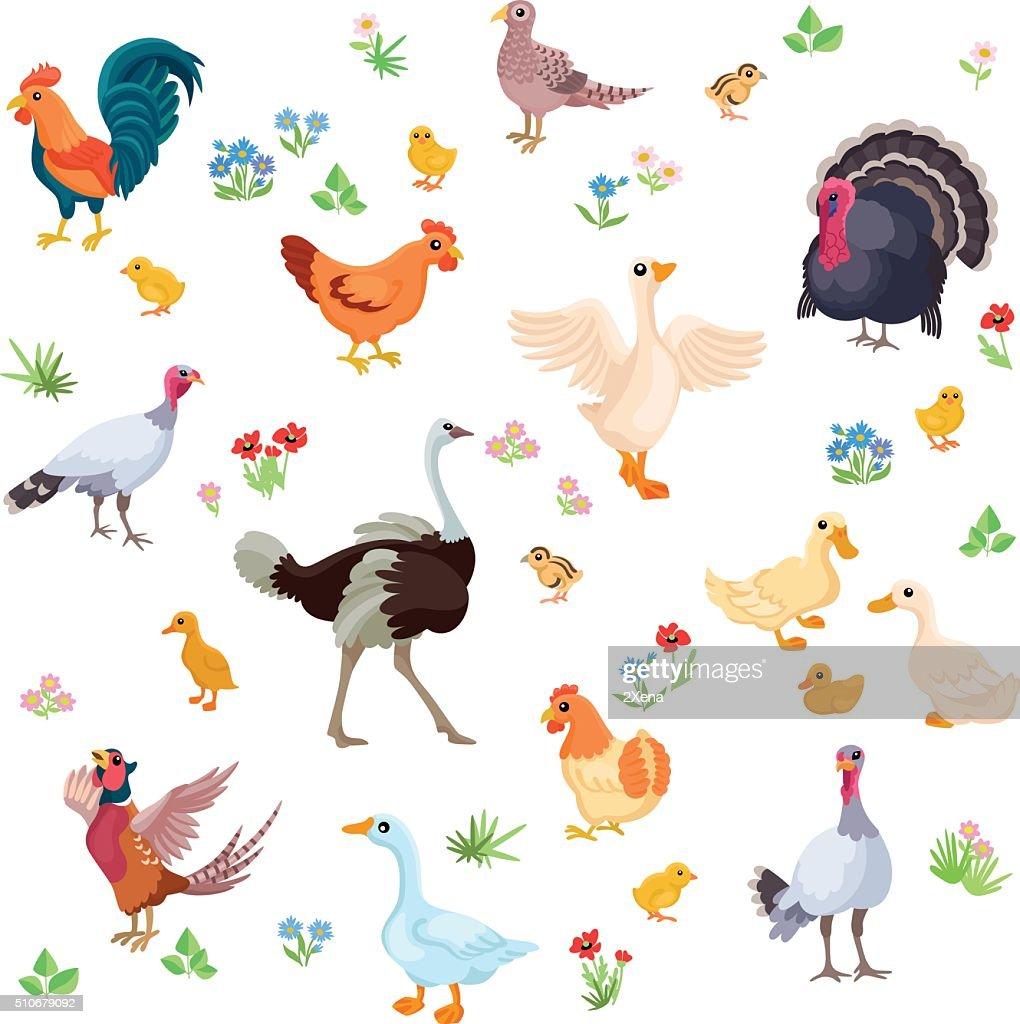 Farm birds in cartoon style as seamless pattern