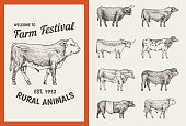 Farm cattle bulls and cows. Vintage cards. Different breeds of domestic animals. set of posters. Engraved hand drawn monochrome sketch.