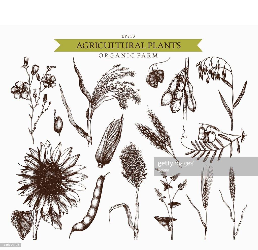 Farm fresh and organic plants set.