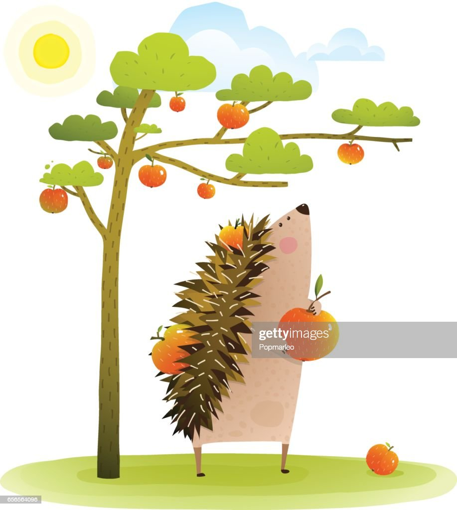 Farm Hedgehog near apple tree harvesting