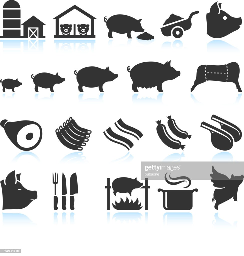 Farm Pig Live Cycle and Food Preparation Set : stock illustration