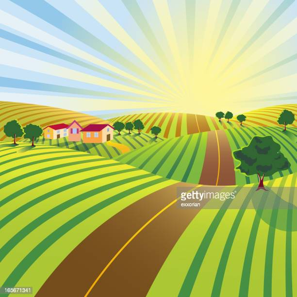 Farm Road in Morning