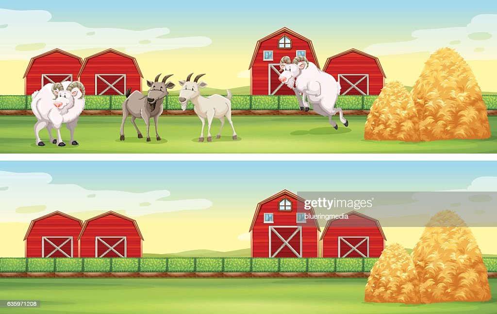 Farm scene with goats and barns