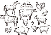 Farm, vector sketch. Collection animals such as horse, cow, bull