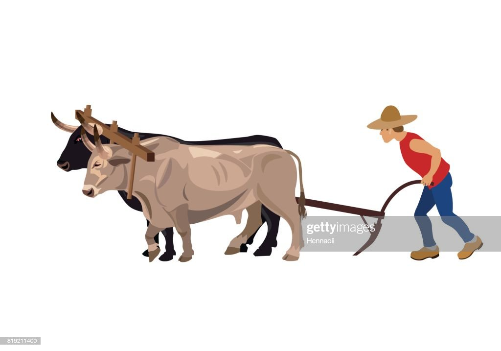 Farmer plowing field with oxen
