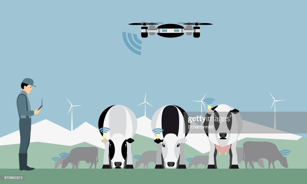 Farmer with drone counts cows.