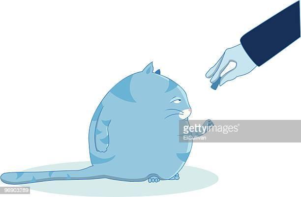 fat blue cat