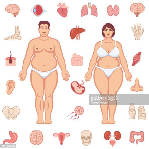 fat human body with internal organs - placenta stock illustrations, clip art, cartoons, & icons
