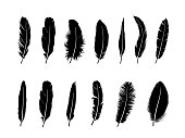 Feather set.  Different  birds feathers silhouette icons over white background