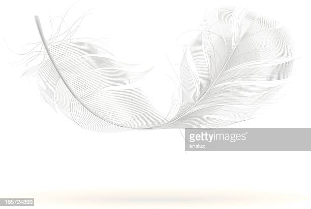 feather - feather stock illustrations