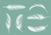 Feathers collection. Flying furry of goose vector realistic pictures isolated on transparent background