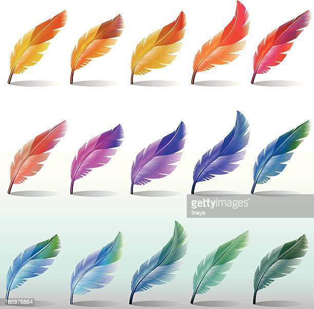 feathers colour - feather stock illustrations