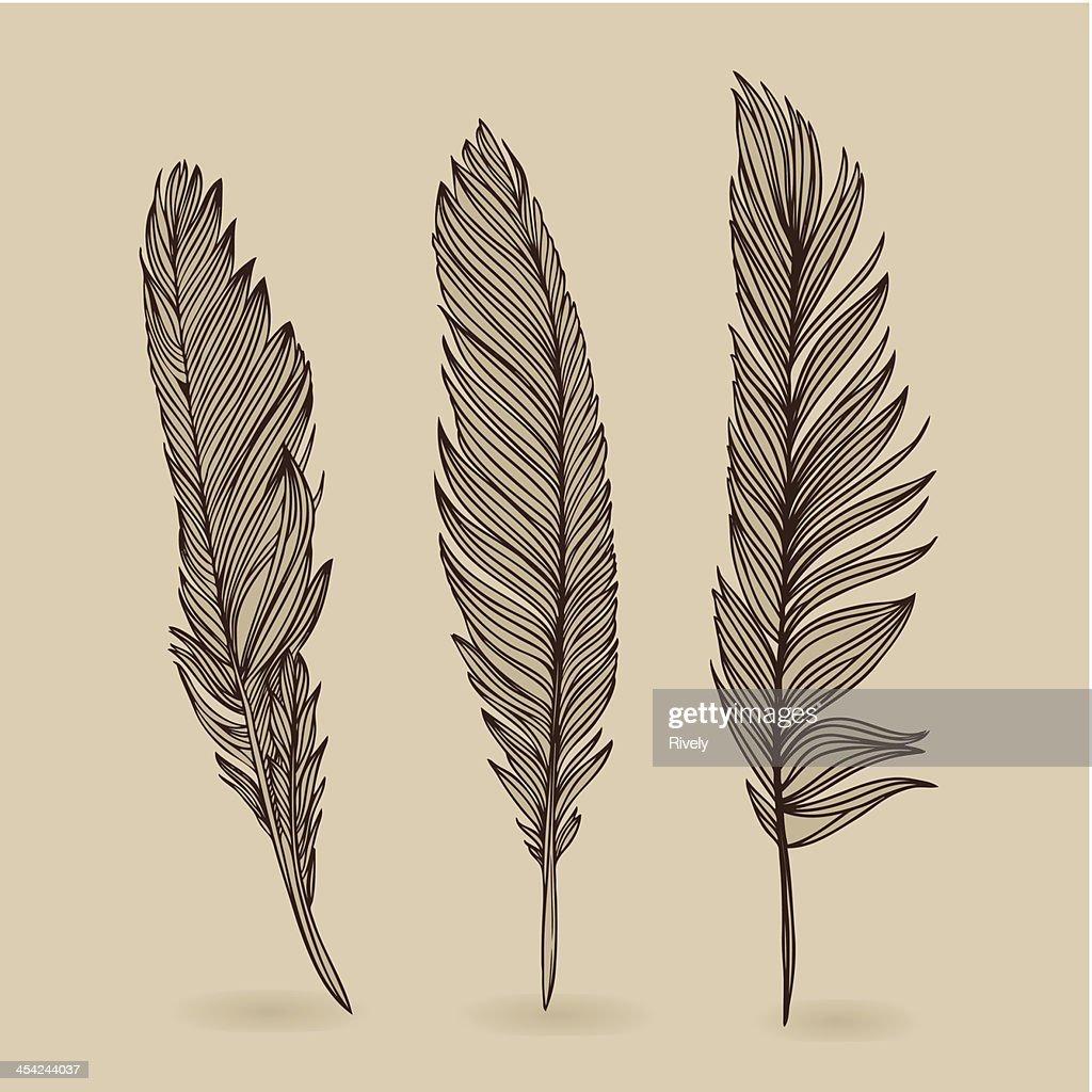 Feathers of bird - vector retro vintage set : Vector Art