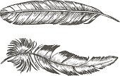 Feathers Set Hand Draw Sketch. Trendy Tattoo Template. Vector