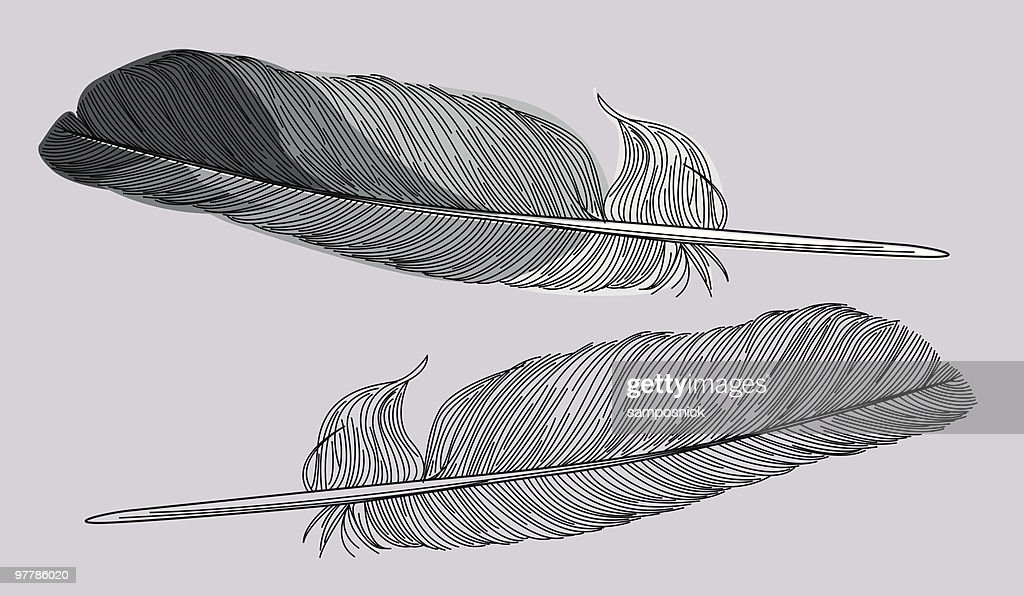 Line Art Feather : Feathers two styles vector art getty images