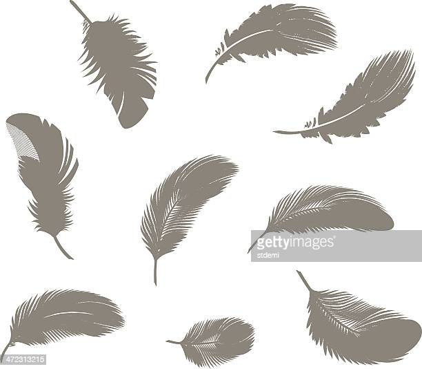 feathers - feather stock illustrations