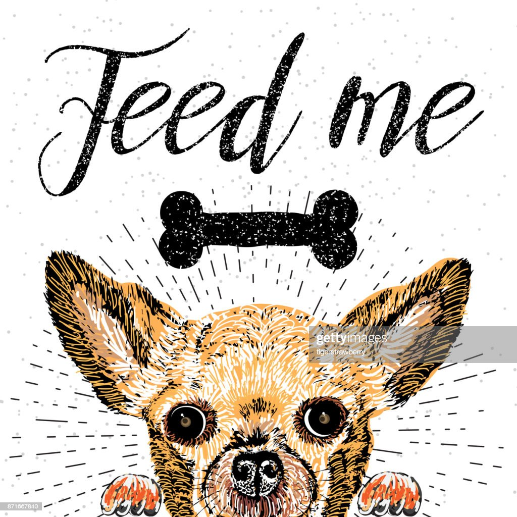 Feed me. Vector illustration with hand drawn lettering and cat on texture background. Inscriptions for pet lovers. Painted brush lettering. Custom typography. Calligraphic. Poster, demanding phrase.