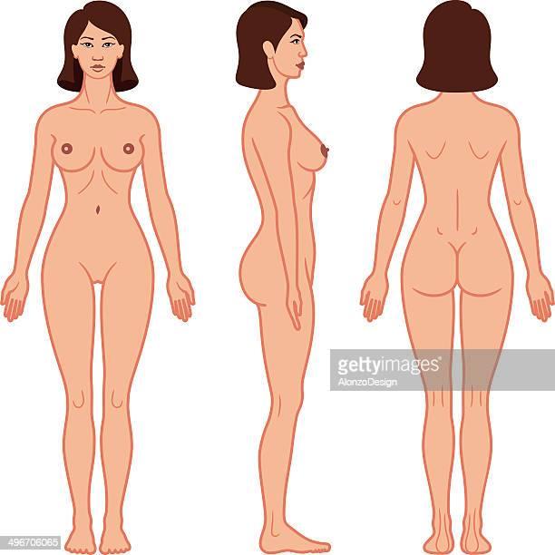 Weibliche Körper auf der Vorderseite, an der Seite und der Rückseite