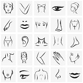 Female body parts icons