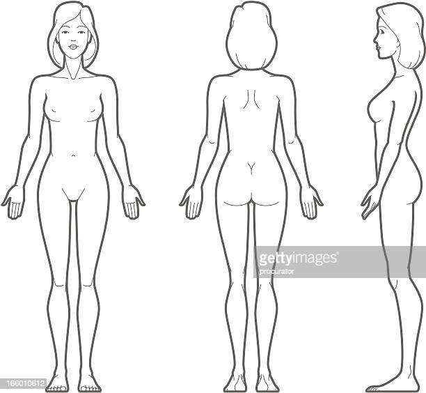 weibliche körper - menschliches körperteil stock-grafiken, -clipart, -cartoons und -symbole