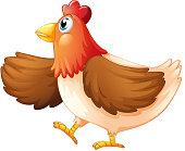 Female chicken