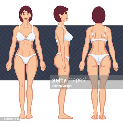 Human Body Anatomy Vector Art Getty Images