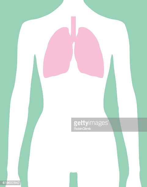 female lungs body icon - torso stock illustrations