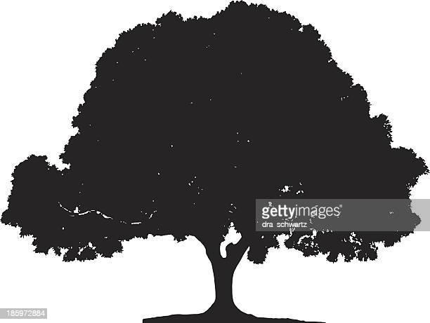 ficus tree silhouette - fig tree stock illustrations