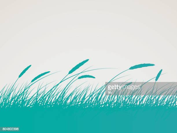 field background - corn stock illustrations, clip art, cartoons, & icons