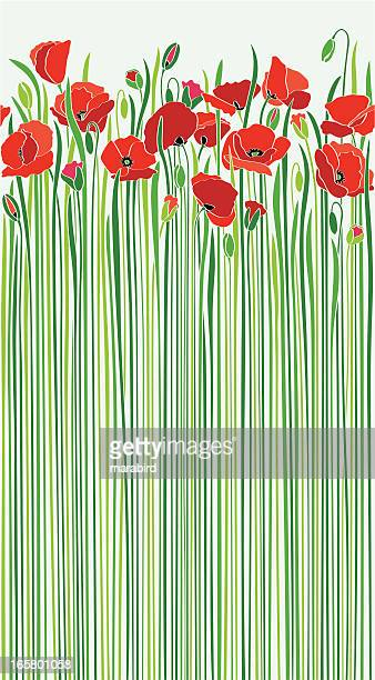 field of red poppies by the road in sunny spring - poppy stock illustrations, clip art, cartoons, & icons