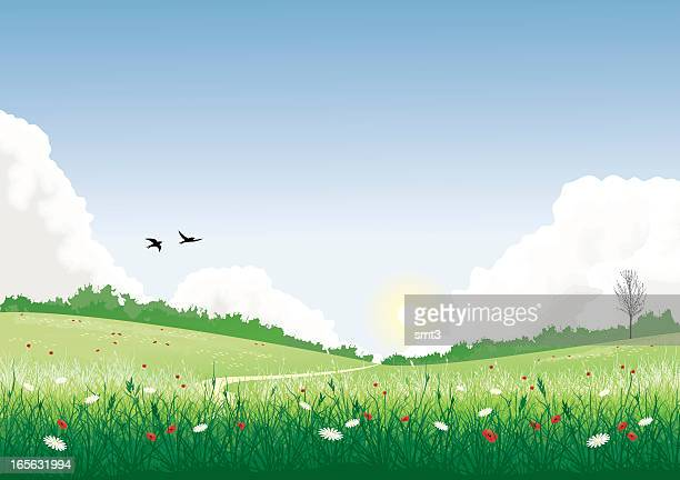 field with wild flowers - wildflower stock illustrations