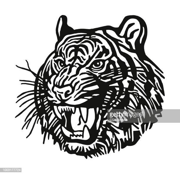 fierce tiger - agression stock illustrations, clip art, cartoons, & icons