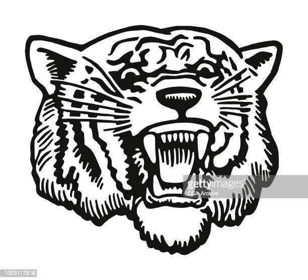 fierce tiger - snarling stock illustrations